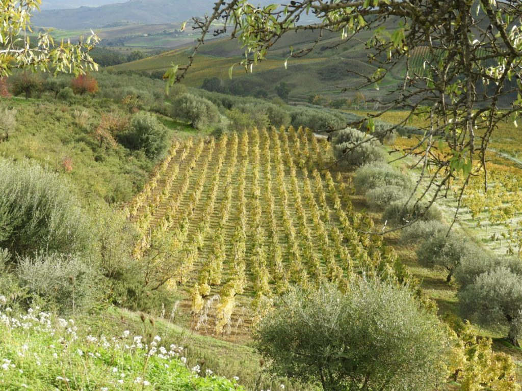 luxury wine and food tours Italy